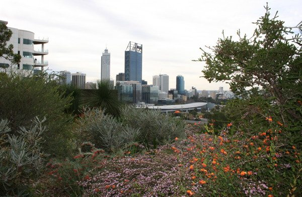 Perth Australia with winter flowers in foreground